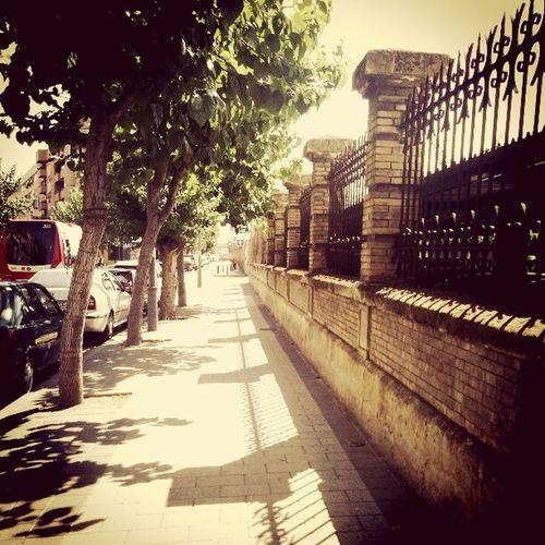 Mucia Trees Station Train Estación De Tren Street Streetphotography Street Photo Calle