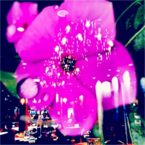 花淚 Real People One Person Women Leisure Activity Close-up Outdoors Men Day Bubble Wand People Flower Synthesis Building City Nature Blue Flower Head