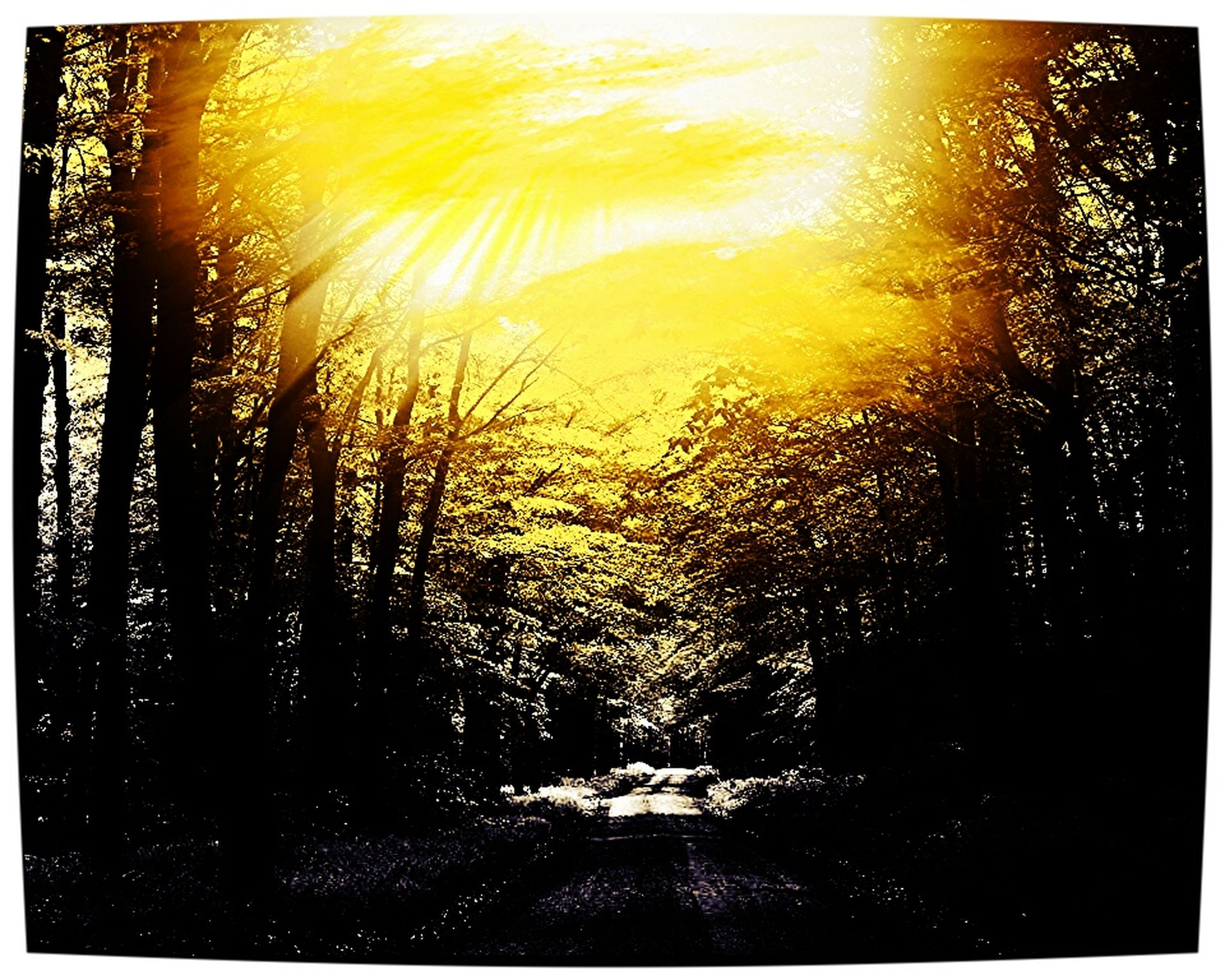 transfer print, auto post production filter, tree, sun, sunlight, sunbeam, water, tranquility, beauty in nature, lens flare, tranquil scene, nature, scenics, growth, sunset, forest, outdoors, no people, idyllic, reflection