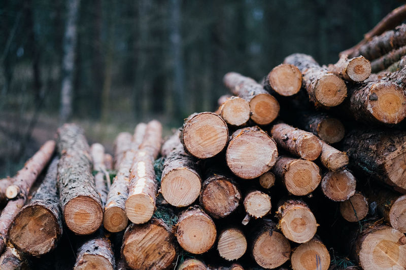 Bokeh Brown Close-up Day Deforestation Forest Forestry Industry Fujifilm Grass Large Group Of Objects Log Macro Nature Nature No People Outdoors Stack Timber Tree Water Wood Wood - Material Woodpile
