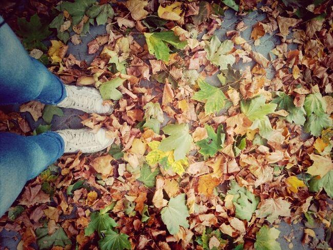 Autumn is here! Hello World