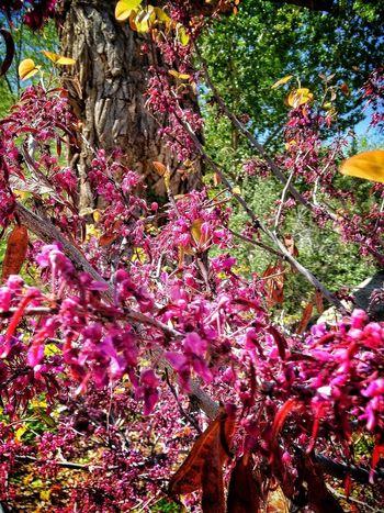 Enjoying The Sun Spring Flowers EyeEm Nature Lover