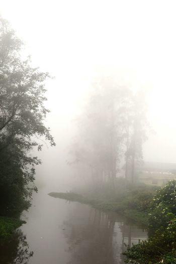 Foggy Day Munnar Kerala MunnarHillstation