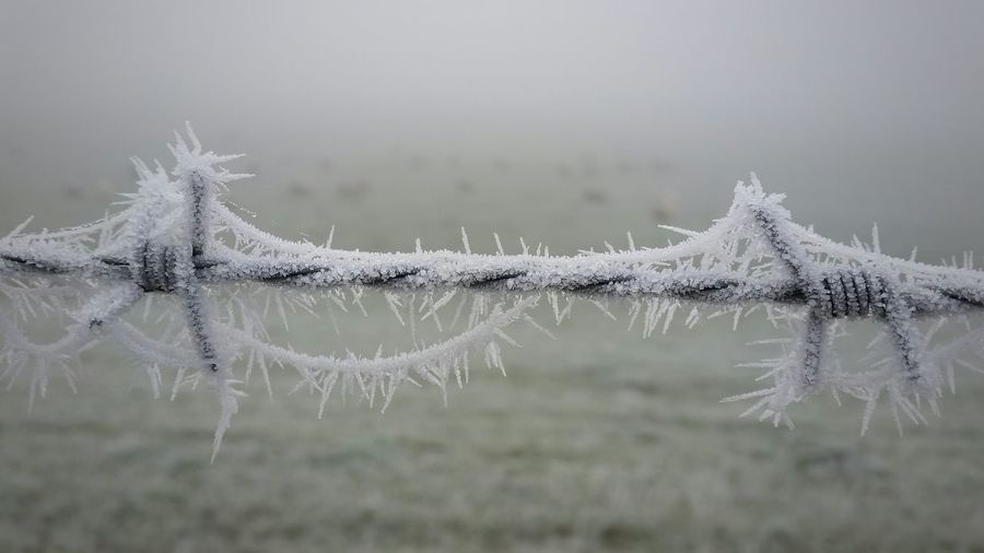 Close-Up Of Frozen Barbed Wire During Winter