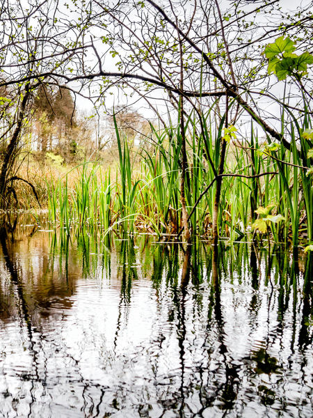 Beauty In Nature Curraghchase Day Grass Growth Ireland Lake Lake View Marsh Nature No People Outdoors Reflection Scenics Tranquil Scene Tranquility Tree Water