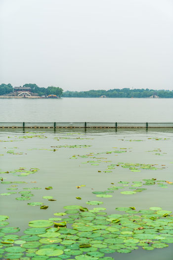 A view of the duckweed floating on the lake of the park Beautiful Beijing Duckweed Garden Green Journey Lakeside Landscape Nature Park Quiet River Scenery Shore Tourism Travel Water Water Edge Water Surface Beauty In Nature Tranquility Sky Tranquil Scene Scenics - Nature Day Lake No People Non-urban Scene Plant Clear Sky Copy Space Outdoors Idyllic Waterfront Reflection Floating On Water