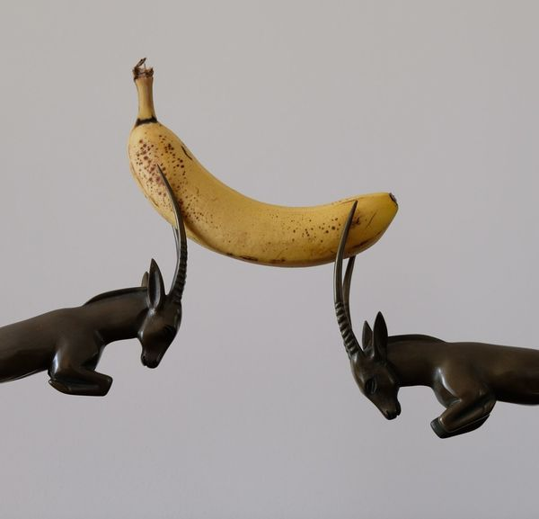 Banana Banana Banana Peel Banana Tree Eat More Fruit Eating Healthy Fight Fighting Food Food Presentation Food Styling Fruit Fruit Photography Fruitporn Hungry Justice Law Lawyer Politics Politics And Government Putin And Trump Revolution Right Rights Trump And Putin Paint The Town Yellow