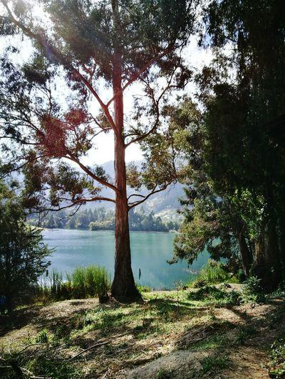 Tree Lake Water