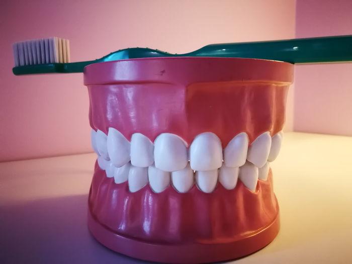 dental hygiene, teeth model Smile Teeth Teeth Model Teeth Care Dentist Dentistry Equipment Dental Model Toothbrush Wide Smile White Teeth Model Gums EyeEm Selects Indoors  No People Healthcare And Medicine Close-up Day