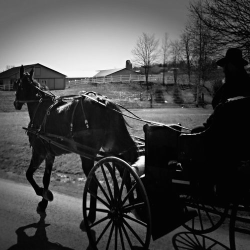 Black And White Photography Monochrome _ Collection Monochrome_life From My Lens The Road Home  From My Point Of View Animal_collection Drive By Photography Sugarcreek Ohio, USA Horse And Buggy Amish Country Amish Know How To Roll Amish Buggy Animal Photography Amish Life The Road Ahead Ladyphotographerofthemonth Exceptional Photographs Simple Photography Photography In Motion My Favorite Photo