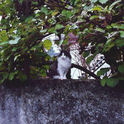 Penelope the LadyCat... Cats Catsofinstagram Cat Lovers