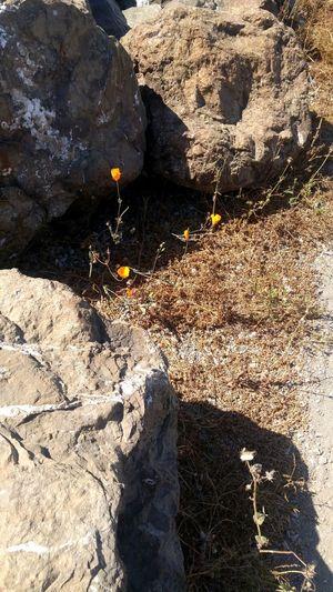 Hanging Out Sun&done Flower Treethugger Naturerox Summertime Unfiltered Islandlived SFBay Streetgardner