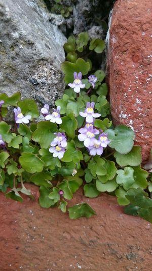 Flowers Nature Brick Wall