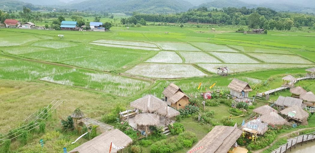 you can find this view in everywhere in Pua.. i.e. temple Scenics - Nature Green Views Rice Paddy Rural Scene Tree Agriculture Cereal Plant Field High Angle View Farm Cultivated Land Grass Terraced Field