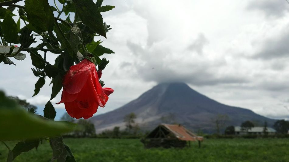 Volcano Erupting Sumatra  Indonesia_photography Sibanungvolcano Flowres Amazingindonesia Nature_collection Nature Photography Volcanic Landscape Naturelandscape