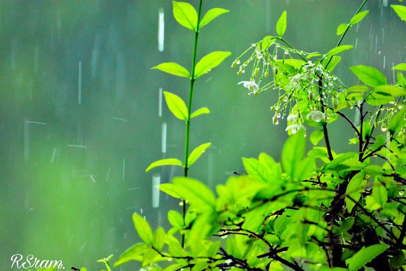 Green Color Nature Leaf Plant Water Summer Lake Growth Outdoors No People Underwater Day Beauty In Nature Close-up Freshness Thick