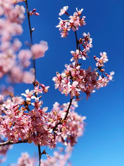 Flower Plant Sky Fragility Freshness Beauty In Nature Springtime Nature Blossom Tree Growth