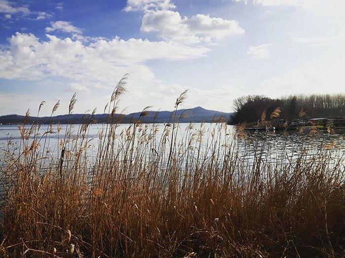 Canne al Vento Lago di Viverone Viveronelake Lake Nature Nature_perfection Landscape Landscape_captures Landscape_lovers Ig_piedmont Biella Ig_biella Ig_biellaturismo