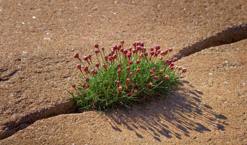 Beach flowers in a rock crevice. Nature No People Plant Land Day Growth Close-up Outdoors Beauty In Nature Sunlight Red Flower Nordic Scandinavia Robust Surviver Hard Life Strength Granite Optimism Life Sweden