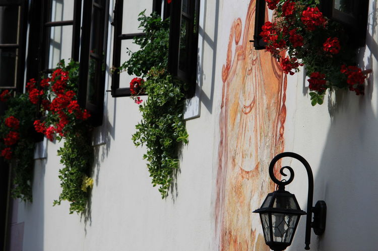 Geraniums Slovenia Architecture Building Exterior Day Flower Flowering Plant Fresco Hanging Lamp No People Outdoors Potted Plant Radovljica September 2018 Windows