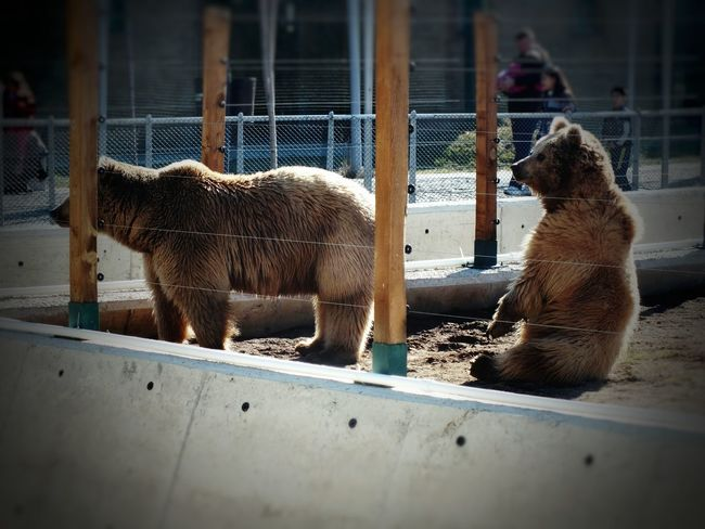 Cage Animal Themes Animal Mammal Animals In Captivity Trapped Domestic Animals