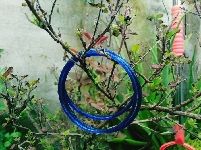 The holy tree.. Plant Day Nature No People Tree Close-up Metal Jewelry Design Green Color Beauty In Nature Ring One People Mobile Phone Photography Meizu M5 Meizu Mobile Photography Selective Focus Nature