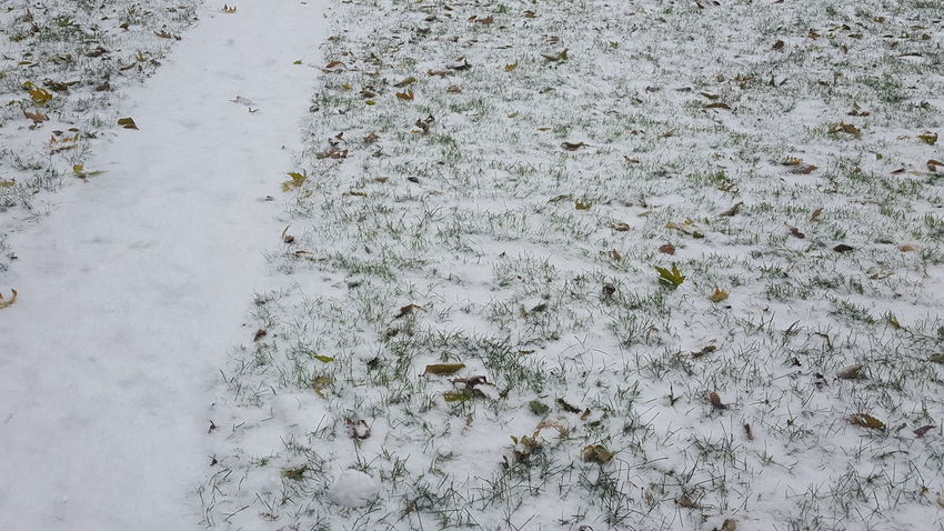 Backgrounds Fall And Winter First Snowfall High Angle View Nature No Filter No Edit Snow Covered Grass White Color