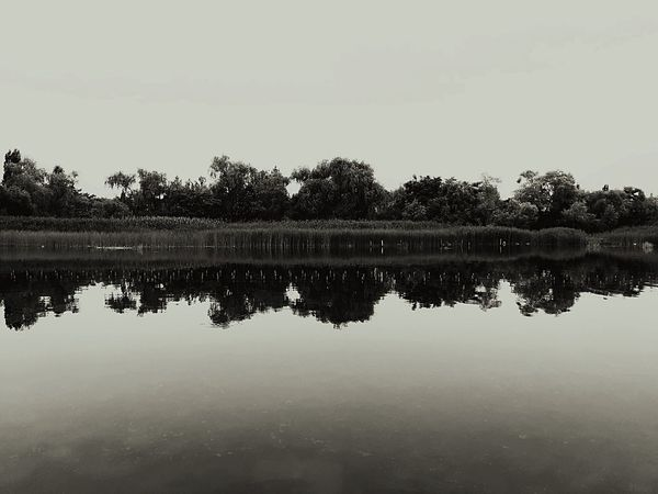 half and half Reflection Water Tree Lake Sky Nature Tranquility No People Plant Beauty In Nature Scenics - Nature Clear Sky Copy Space Day Waterfront Tranquil Scene Outdoors Idyllic Symmetry