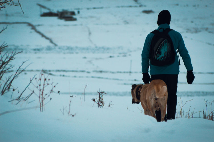 Rear view of man with dog on snow covered land