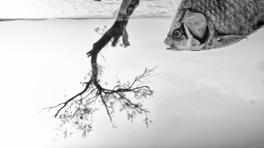 Streetphotography Bnw_collection Blackandwhite Street Photography EyeEm Sea Fish Abstract Abstract Photography Creativity Bw Bnw Photography Nopeople Tree Branch Bare Tree Rural Scene Tree Trunk Sky Landscape Dead Tree Single Tree Abstract Backgrounds