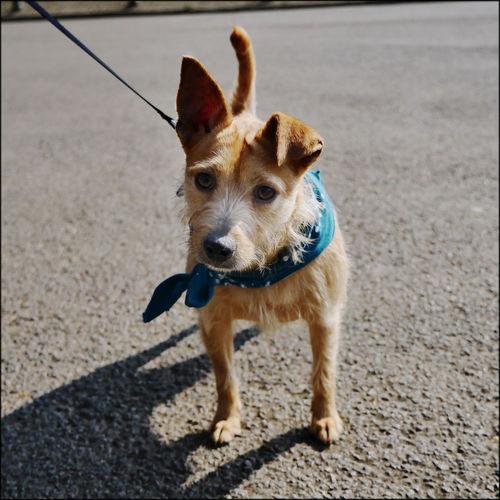 Animal Themes Bandanna Cute Dog Floppy Ears Neckerchief One Animal Portrait Stray Dog Walk In The Park