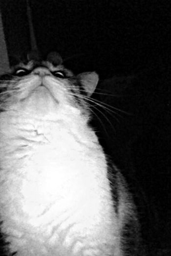In my bed.. Cat Scary Face Blackandwhite Night