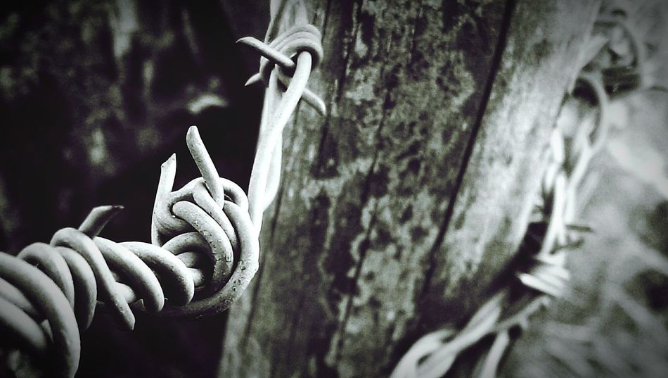 Barbed Wire Cavehill Belfast Close-up Check This Out Photography Close Up Taking Photos Amazing Photo Eyeemphotography