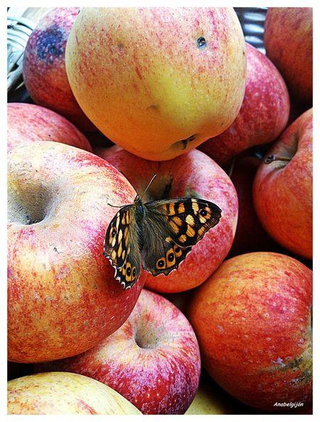 Taking Photos My Smartphone Life Animal Photography Frutas Y Verduras Vegetables & Fruits