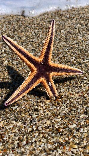 Close-up of starfish on beach