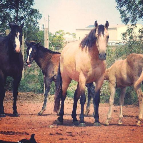 At school, just posting this. Relaxing Enjoying Life My Horses First Eyeem Photo