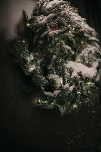 Close-up of christmas tree in snow