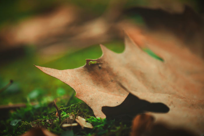 Autumn Beautiful Beautiful Nature Dried Leaves Growth Ivy Leaves Nature Plant Beauty In Nature Blooming Blossom Bokeh Change Floor Flower Fruit Garden Ivy Ivy Leaf Leaf Vein Leaves Outdoors Season  Selective Focus Spring