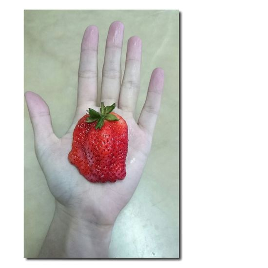 Huge BIG Straberry Fruit Cool Taking Photos Cute