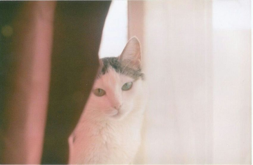 Zenit122 Film Photography 35mm Cat♡