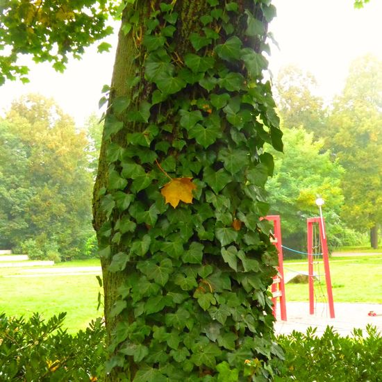Paint The Town Yellow Beauty In Nature Close-up Day Grass Green Color Growth Nature No People Outdoors Plant Sky Sunlight Tree Discover Berlin