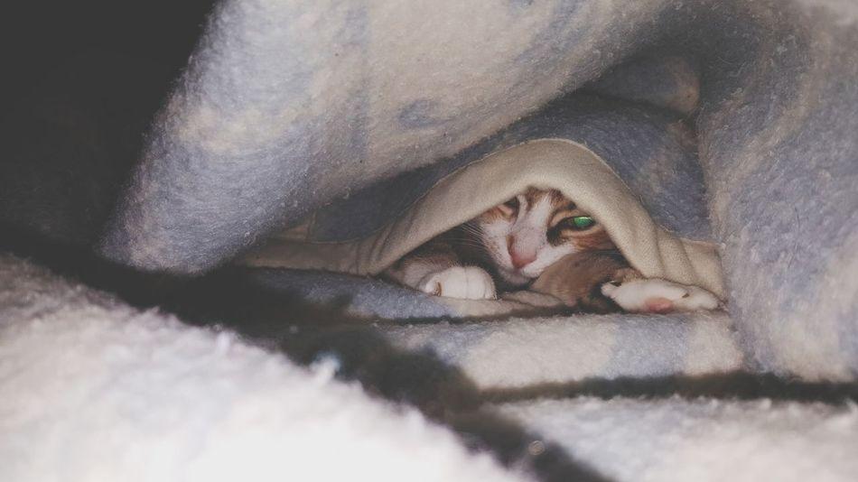 EyeEm Selects Gatto Cat♡ Cat Coperta Nascondersi Eyes Sleeping One Animal Animal Themes Lying Down