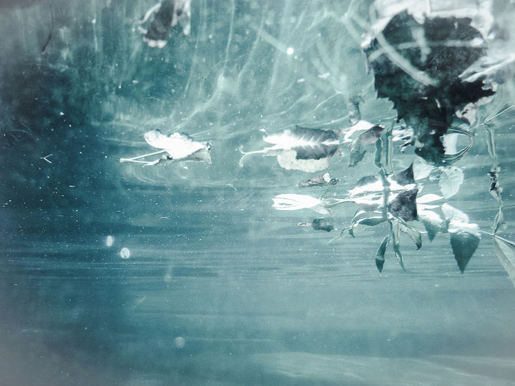 Blue Deep EyeEm Nature Lover Leaves Leaves In Water Getting Inspired My Winter Favorites Underwater Sea Selective Focus The Moment - 2015 EyeEm Awards Tree Water Water Reflections Water_collection Zen Pastel Power Showcase: January Plastic Environment - LIMEX IMAGINE