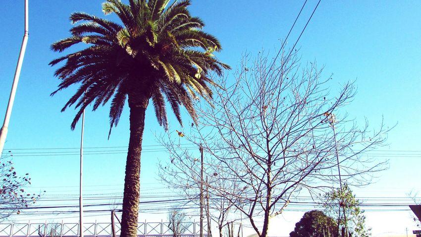 Linda tarde después de un día de lluvia. Lluvia Celeste Cielo árbol Verde Cian First Eyeem Photo
