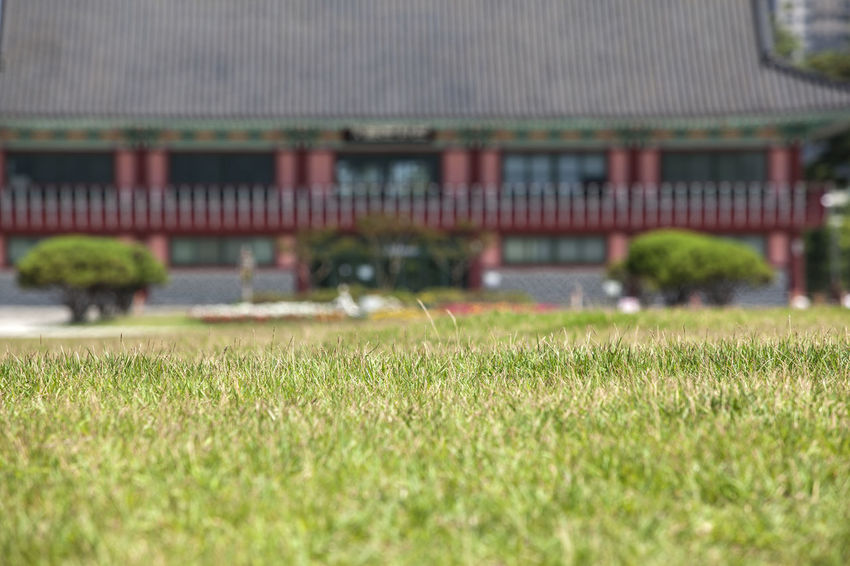 Beauty In Nature Close-up Day Field Focus On Foreground Grass Grass Grassy Green Green Color Growth Korean Traditional Architecture Lawn Lawnmower Michuhol Park Nature No People Outdoors Plant Selective Focus Songdo, Incheon Surface Level Tranquility