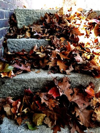 No People Backgrounds Close-up Day Nature Outdoors Beauty In Nature Stone Stairs Leaves Autumn Colors EyeEmNewHere