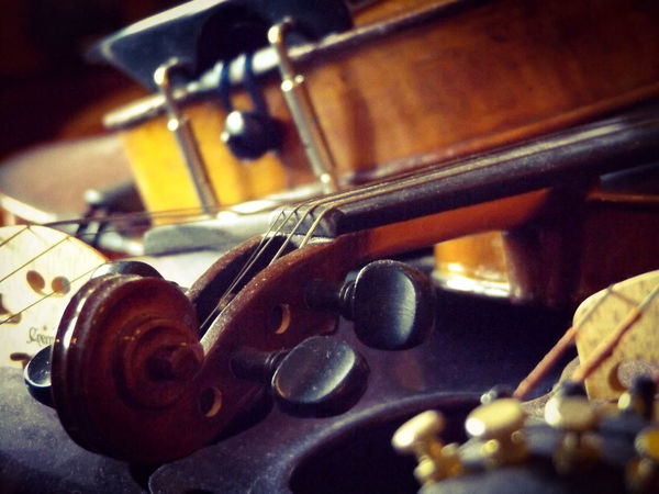 Musical Instruments Curves Wood Curves And Lines Focus On Foreground Violin Instrument Music Brown Violin Strings Intricate Photography Depth Of Field Depth Of Focus Intimate Scroll Tuning Pegs Capture Tomorrow
