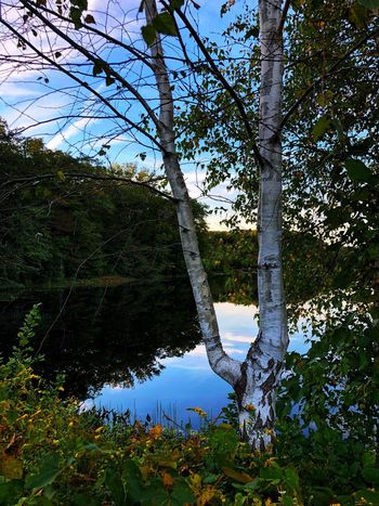 Plant Tree Water Nature Reflection No People Growth Scenics - Nature Outdoors Tranquil Scene Branch Green Color Sunlight Sky Lake Day Land Tranquility Beauty In Nature