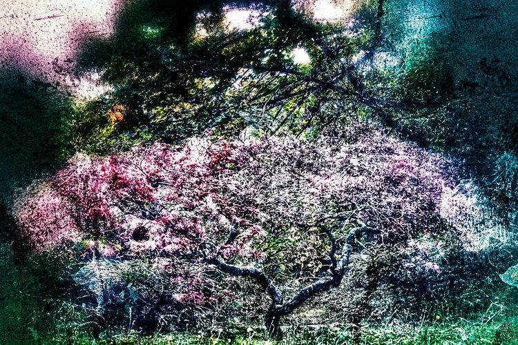 Litle tree...