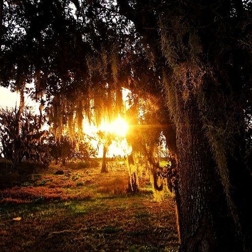 Sunset Nature Morning Sunrise Trees Tree Iphoneonly Photooftheday Picoftheday Louisiana Justgoshoot South Igers Instagood Instalike Rsa_nature Rsa_trees Iphone5s Rei1440project Jj_louisiana Deepsouth Bns_trees Southernlife Onlylouisiana Louisianatravel Pocket_sunset Gg_sunset Jj_louisiana_028 Tree_magic